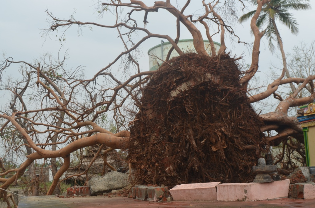 GAJA CYCLONE – Humanitarian Response-15